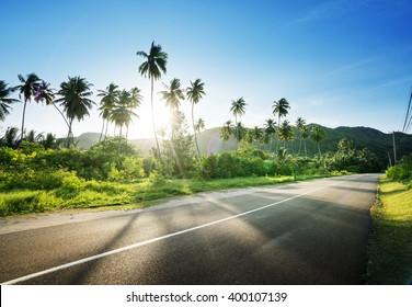 route déserte dans la jungle des îles Seychelles