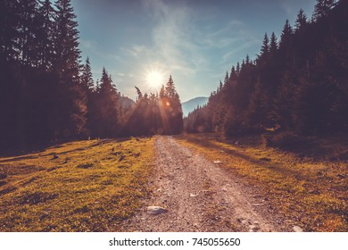Empty road in pine tree forest. Trekking in Carpathian mountains, Ukraine. Nature autumn landscape. Travel background. Holiday, hiking, sport, recreation. Vintage toning filter
