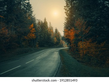 Empty road through the forest in autumn