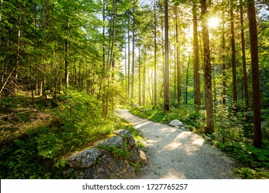 Empty Road through forest with real sun, beautiful summer morning, landscape