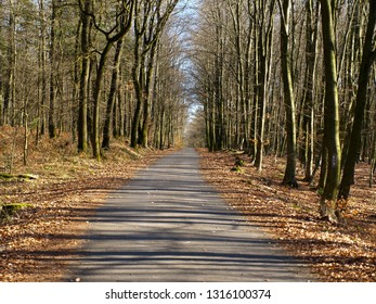empty road through a forest in springtime on a sunny day