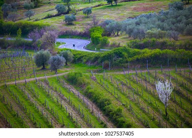 empty road through vineyards in Tuscany