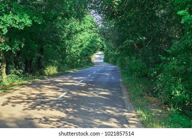 Empty road winding among trees on a warm summer day