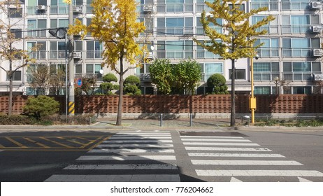 Empty road with zebra crossing and  modern condominium and yellow tree in autumn