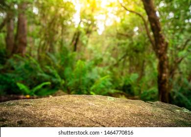 Table en roche vide pour l'affichage des produits dans la jungle de Tasmanie, Australie. Concept de publicité de produits naturels.