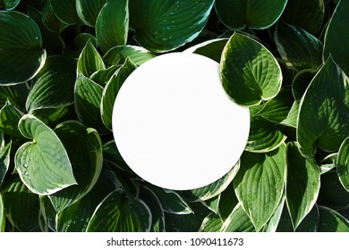 Empty round paper mock up between leaves of nature