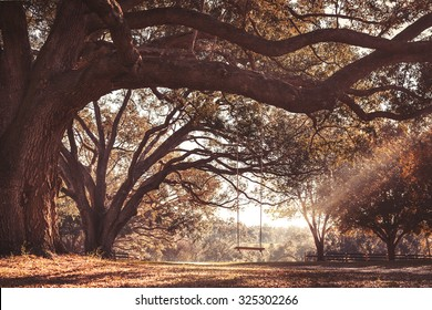 Empty rustic wooden swing hanging by rope on large live oak tree branch in the autumn fall countryside at a farm or ranch looking serene peaceful calm relaxing beautiful southern