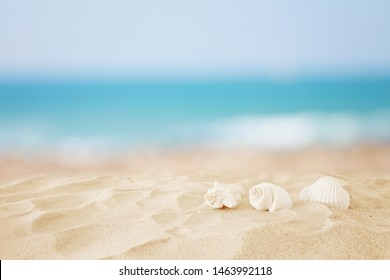 Empty sand beach and shells in front of summer sea background with copy space