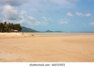 empty sandy beach with palm trees on background blue sky.