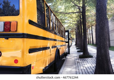 Empty school buses parked next to a curb on a field trip, under the shade of a row of trees
