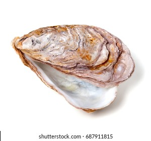 Empty seashell from oyster isolated on white background