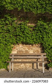 empty seat and of wall covered with ivy in garden