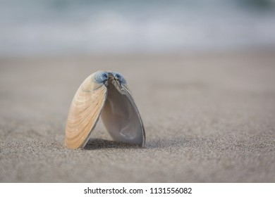 Empty shell standing on the beach