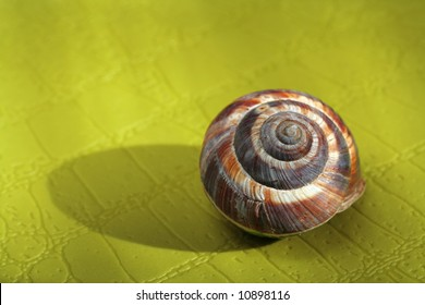 Empty Snail Shell on green background