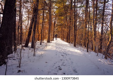 An empty snow covered forest, and a solitary person in the distance, leaving footsteps on the snow covered trail, under the dimming sunlight.