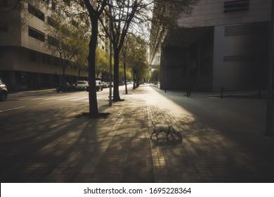 Leere Straße während der Coronavirus-Epidemie. Barcelona, Spanien