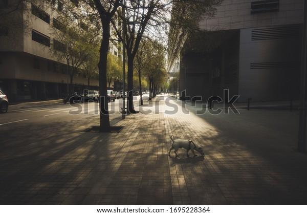 Empty street during coronavirus epidemic. Barcelona,Spain