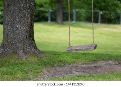 Empty tree rope swing with wooden board in summer park