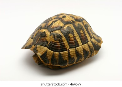 Empty turtle shell, isolated on a white background