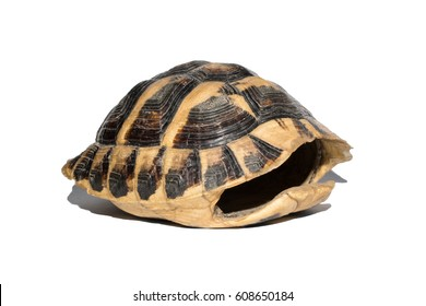 empty turtle shell isolated on white background