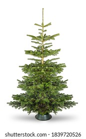 Empty undecorated natural  fresh green Nordmann pine christmas tree isolated in natural condition on white background - Shutterstock ID 1839720526