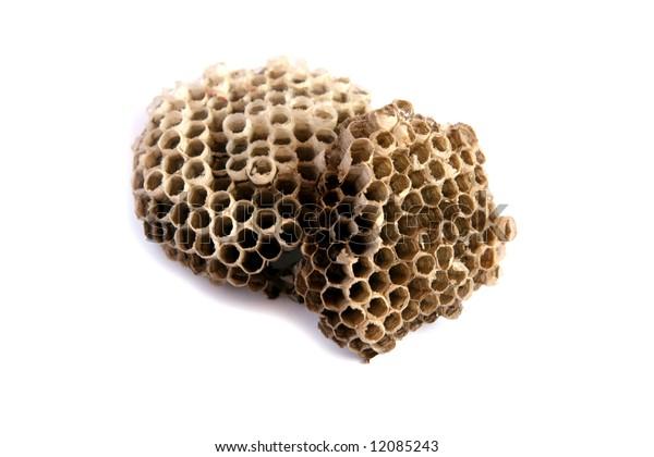 Empty wasps' nest isolated on white