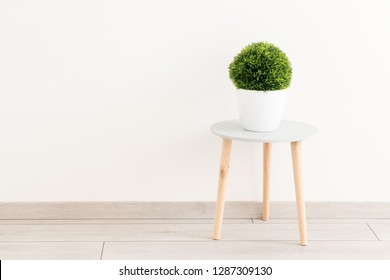Empty white room with a green plant on a table