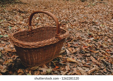 Empty wicker basket on the brown fallen leaves in the autumn woods
