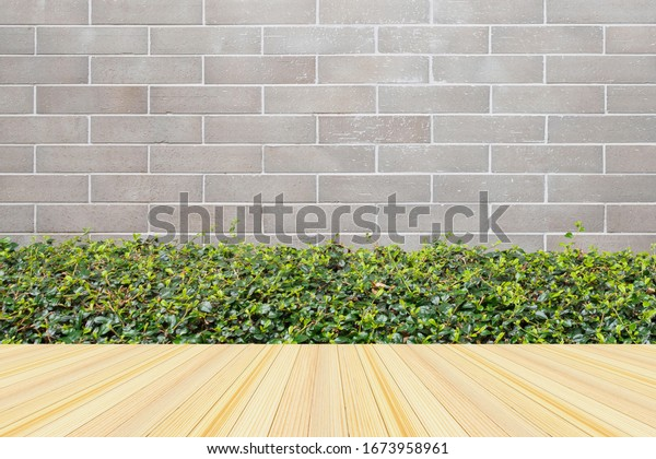 Empty wood floor with green plant with gray brick wall background