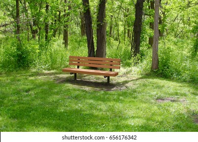 The empty wood park bench in the forest under the trees.