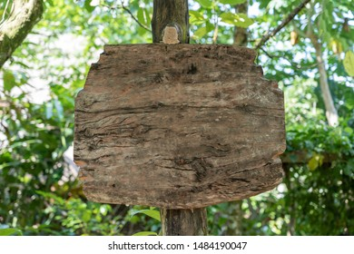 Empty wooden board for text in a rainforest jungle of tropical Bali island, Indonesia. Close up