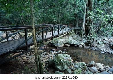 An empty wooden bridge over a creek in Springbrook National Park in Queensland Australia.