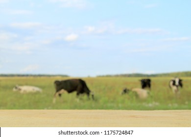 empty wooden table with blurred background with five cows grazing in rural landscape / place for the most delicious milk