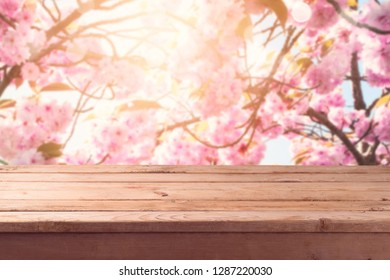 Empty wooden table with over blossom cherry tree blurred background. Spring concept. Mock up for display or montage product