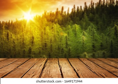 Empty Wooden Table for Products Display with Blurred Sunset Cannabis Field - Marijuana Plants Background