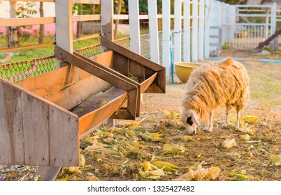 Empty wooden trough for feeding sheep hay.