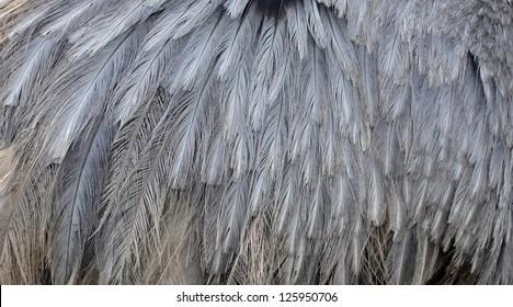 emu feathers close up