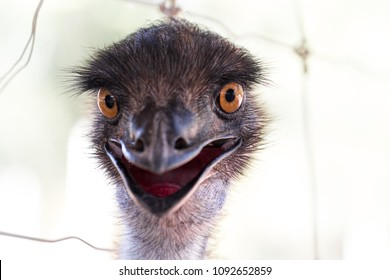 Emu head wiith white background