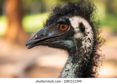 Emu in the outdoors during the day.
