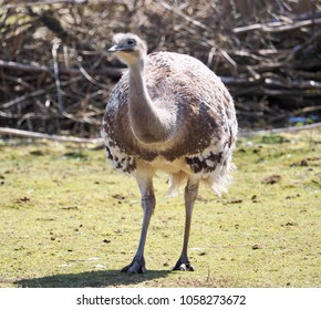 an emu in the sunshine on a meadow