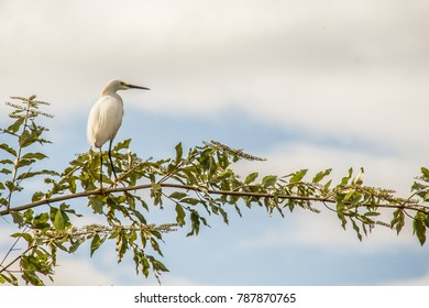 Pájaro en la selva amazónica