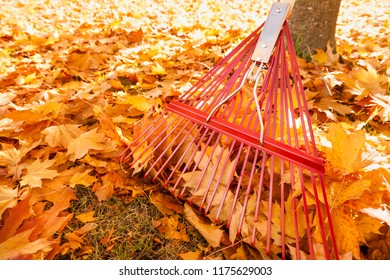Enameled red metal rake, tree trunk and yellow maple leaves in autumn. Fall lawn and garden tools property maintenance yard chores. Horizontal background image with empty blank copy space.