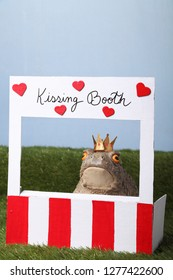 Enchante prince turned into a toar is waiting for a kiss at a kissing booth
