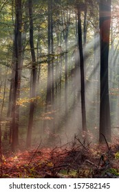Enchanted Autumn Forest with the lovely rising morning sun. Leaves on the ground and light fog in the air. Warm rays of the sun shine through the deciduous woods of Upper Franconia / Bavaria, Germany.