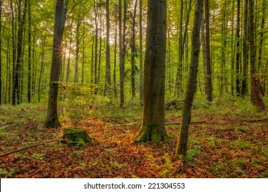 Enchanted Autumn Forrest. Sunrays in October. Golden Colors of the Fall. Lovely Morning Picture