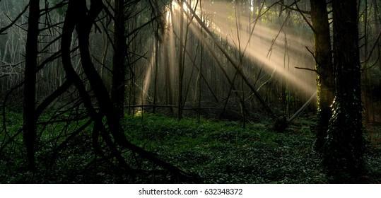 Enchanted florest , natural park Sintra-Cascais, Portugal