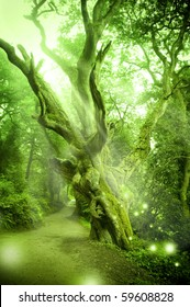 Enchanted Forest with ancient tree.
