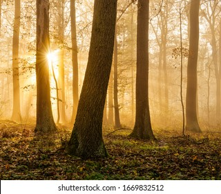 Enchanted Forest in Autumn, Morning Fog illuminated by Sunlight
