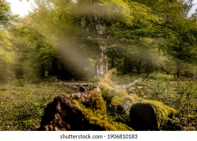 Enchanted forest with fallen tree, seen from an esplanade with another tree in the middle in the background, surrounded by more trees, and the sun's rays falling from the corner - Shutterstock ID 1906810183