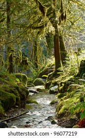 Enchanted Forest Stream-A lush green Oregon forest stream with mossy trees and enchanting light.
